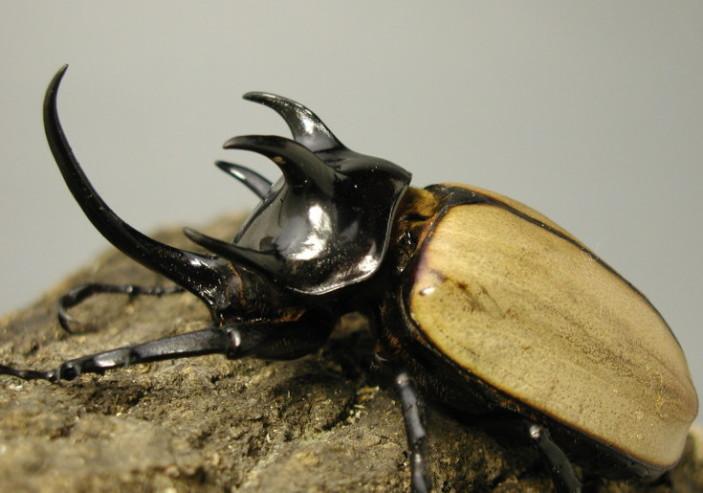 弹起我心爱的土琵琶简谱大笨虫-可饲养昆虫全揽 虫子吧